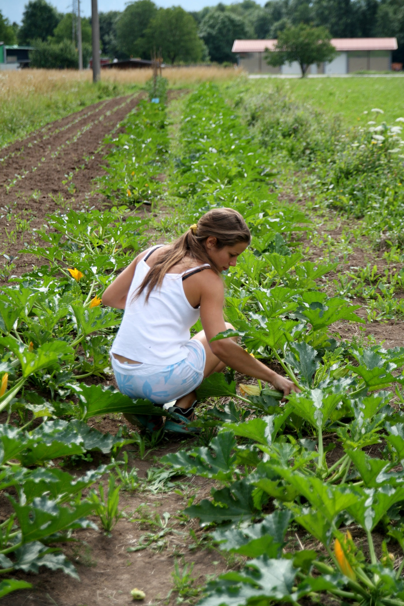 Elena Az. agricola La Sisile